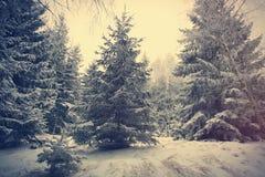 Bosque de la nieve del misterio fotos de archivo libres de regalías