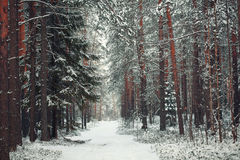 Bosque de la nieve del paisaje en invierno foto de archivo