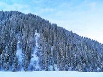 Bosque de la nieve en invierno fotos de archivo