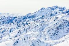 Bosque de la nieve en invierno El bosque nevado de Gongnaisi en invierno foto de archivo libre de regalías