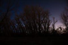 Bosque de la noche Imagen de archivo libre de regalías