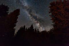 Bosque de la noche debajo del cielo estrellado Paisaje del Fairy-tale Imagenes de archivo