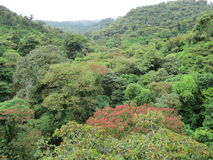 Bosque de la nube de Monteverde Fotos de archivo libres de regalías