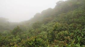 Bosque de la nube de Reserva Biologica Bosque Nuboso Monteverde almacen de metraje de vídeo