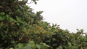 Bosque de la nube de Reserva Biologica Bosque Nuboso Monteverde metrajes