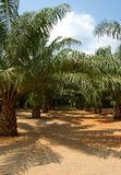 Bosque de la palma Imagenes de archivo