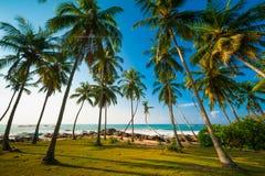 Bosque de la palma fotos de archivo libres de regalías