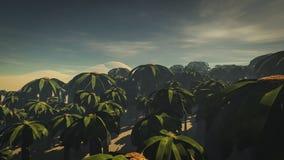 Bosque 2 de la palma Imagen de archivo libre de regalías