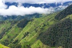 Bosque de la palma de cera cerca de Salento Fotografía de archivo
