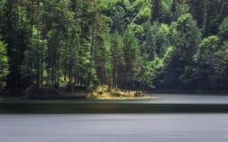 Bosque de la península en el lago Fotos de archivo libres de regalías