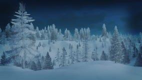 Bosque de la picea Nevado en la noche del invierno Imagen de archivo libre de regalías