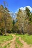 Bosque de la primavera Imagen de archivo libre de regalías