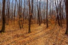 Bosque de la primavera Foto de archivo libre de regalías