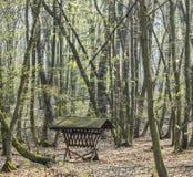 Bosque de la primavera Fotografía de archivo