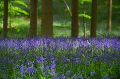 Bosque de la primavera imagenes de archivo