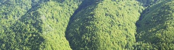 Bosque de la primavera con los alerces, las piceas y los pinos Fotos de archivo