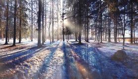 Bosque de la primavera con nieve Foto de archivo libre de regalías