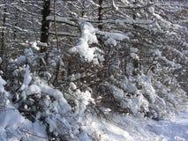 Bosque de la primavera de abedules y de arbustos desnudos altos Imágenes de archivo libres de regalías