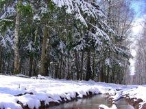 Bosque de la primavera en la nieve, cerca de un charco con agua Fotos de archivo