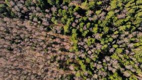 Bosque de la primavera fotografiado del aire fotos de archivo
