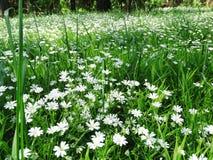 Bosque de la primavera y campo de flores Foto de archivo