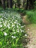 Bosque de la primavera y campo de flores Fotos de archivo libres de regalías
