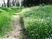 Bosque de la primavera y campo de flores Imagenes de archivo