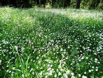 Bosque de la primavera y campo de flores Imagen de archivo libre de regalías