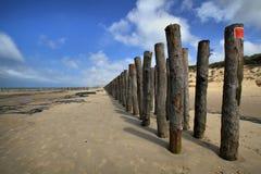Bosque de la protección en la costa de mar, Francia Fotografía de archivo libre de regalías