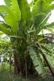Bosque de la provincia de Tambopata Imagen de archivo libre de regalías