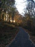 Bosque de la puesta del sol Foto de archivo libre de regalías