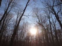 Bosque de la puesta del sol Fotografía de archivo