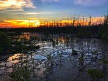 Bosque de la puesta del sol de Beautiul y del mangle de la silueta fotos de archivo libres de regalías