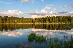 Bosque de la reflexión del lago Fotografía de archivo libre de regalías