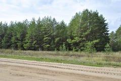 Bosque de la región de Saratov fotografía de archivo libre de regalías