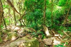 Bosque de la selva fotografía de archivo