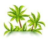 Bosque de la selva del ejemplo del vector de las palmas de coco tropical Fotos de archivo libres de regalías