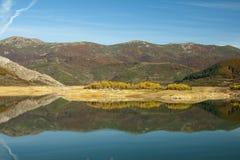 Bosque de la simetría reflejado en agua fotografía de archivo libre de regalías