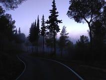 Bosque de la sombra Foto de archivo libre de regalías