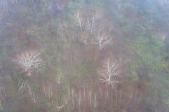 Bosque de la textura superior en día de niebla Imágenes de archivo libres de regalías