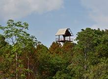 Bosque de la torre - casa en el árbol Imágenes de archivo libres de regalías