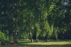 Bosque de la tranquilidad de la foto del vintage Foto de archivo libre de regalías