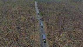 Bosque de la visión aérea almacen de video