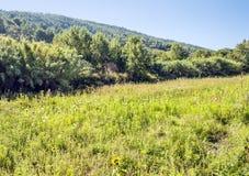 Bosque de Lagrasse Imagen de archivo