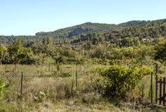 Bosque de Lagrasse Imagen de archivo libre de regalías