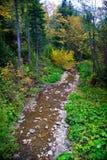 Bosque de las montañas de Bieszczady Foto de archivo libre de regalías