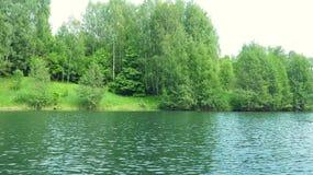 Bosque de los árboles de abedul en la orilla del lago Imagen de archivo
