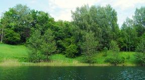 Bosque de los árboles de abedul en la orilla del lago Fotografía de archivo