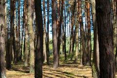 bosque de los árboles de la porción Fotos de archivo libres de regalías