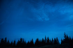 Bosque de los árboles de pino debajo del cielo nocturno oscuro azul Imagen de archivo libre de regalías